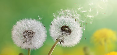 behandeling allergie limburg